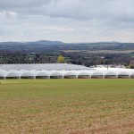 Polytunnels on Kearns Fruit Farm