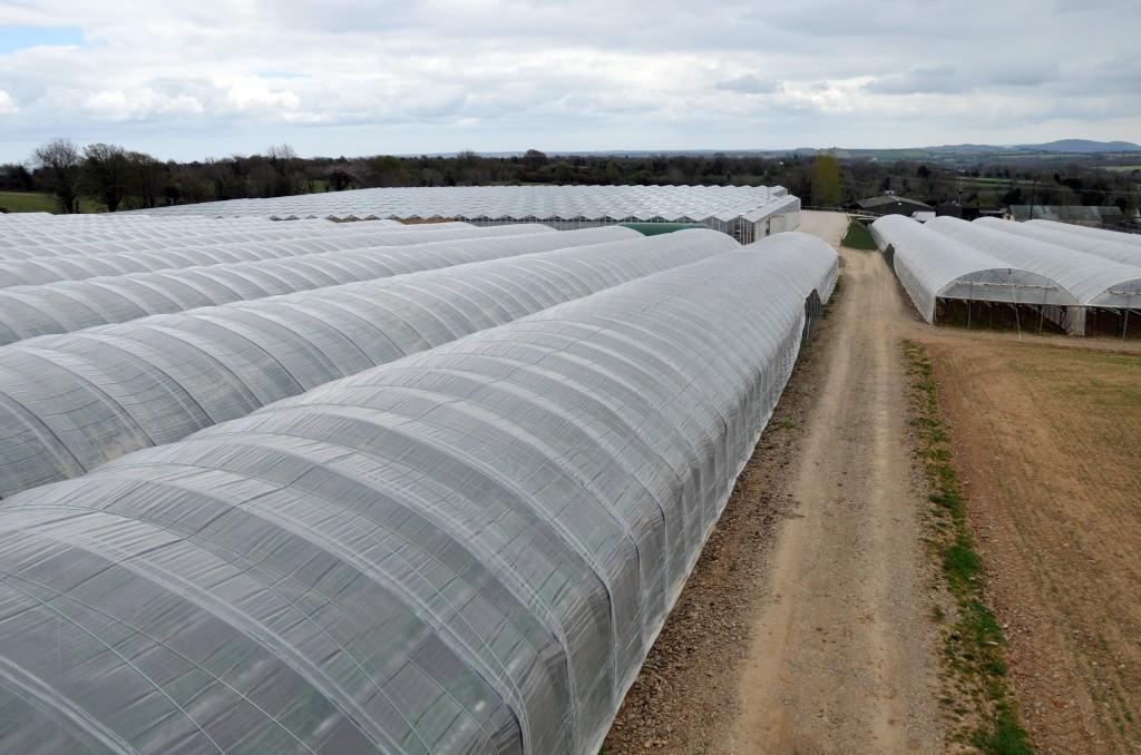 View of polytunnels on Kearns Fruit Farm