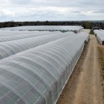 View of polytunnels on Kearns Fruit Farm